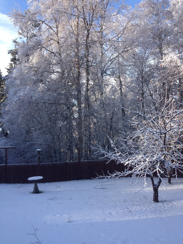 Dec 21 14 snow
